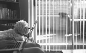 Jak zacząć blogowanie i ile czasu pochłania strona